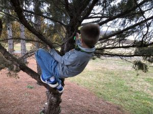 kid climbing tree to get bison tube geocache hanging from tree limb